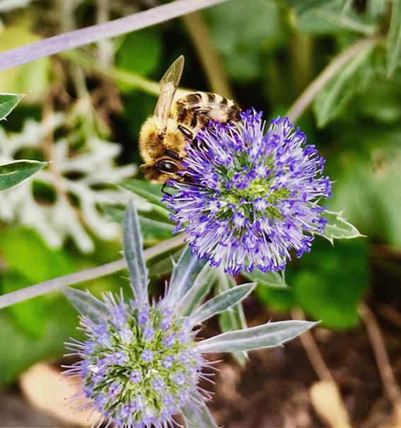Warum Bienen die Welt retten und wo eigentlich der Honig herkommt